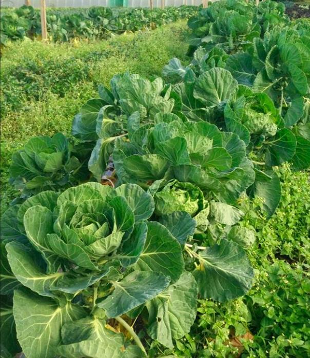 eco-farm-tour-and-tasting